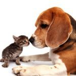 12 Great Quotes About Pets