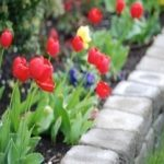 How to Build a Raised-Bed with a Retaining Wall