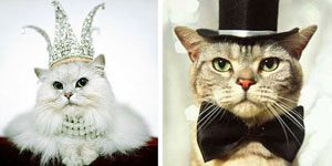 9. Millionaire Pets: Hellcat and Brownie (Cats), $4.1 million
