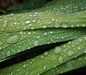 How to Predict the Weather for Your Gardening Chores