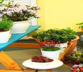 Container Planting for Your Roof Top Garden