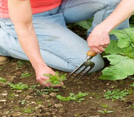 How to Hand Weed Your Garden