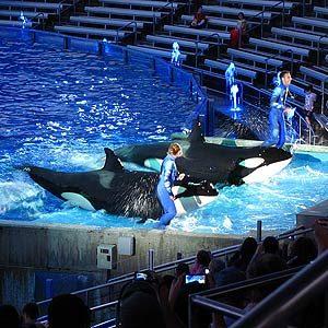 7. SeaWorld Orlando