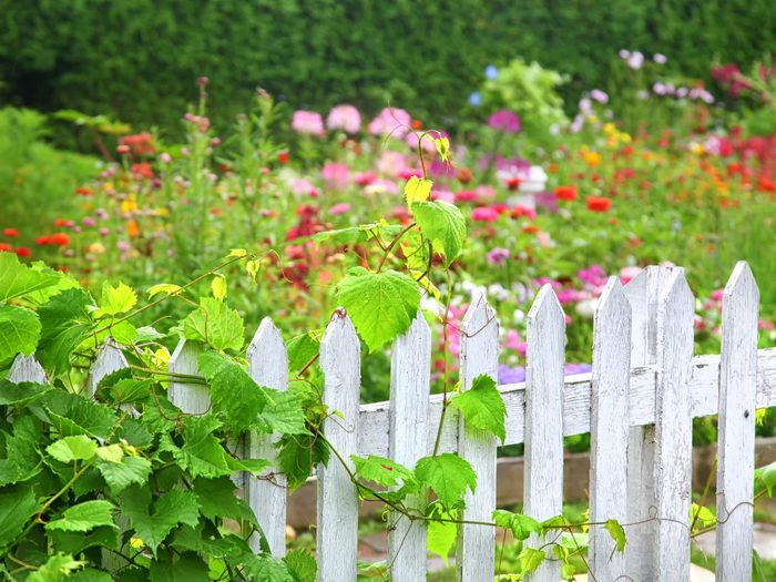6. See What Works in Your Neighbour's Garden