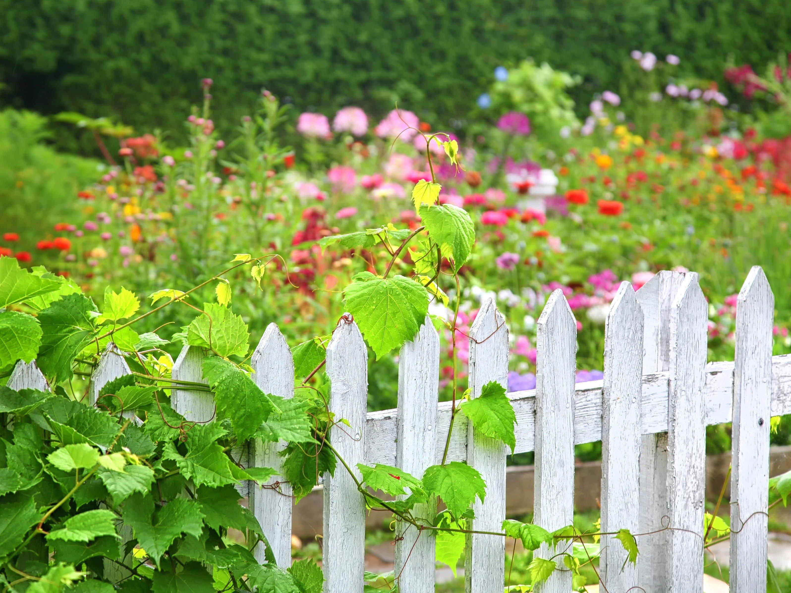 6. Découvrez ce qui fonctionne dans le jardin de votre voisin