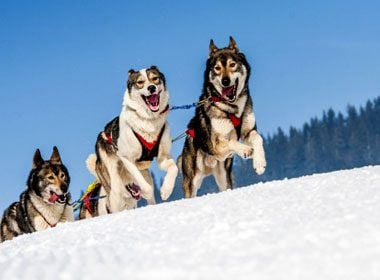 Places to Take a Selfie: Dog Sledding in Canada