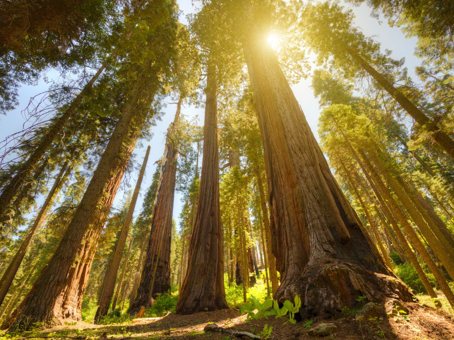 A Sight to See: Sequoia National Park, California