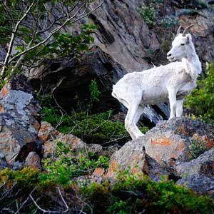 4. Sheep Mountain