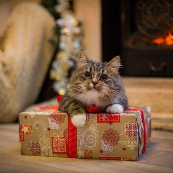20 Adorable Christmas Cats