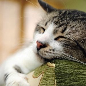 Some Facts to Know About Cats: Cats and Chocolate Don't Mix