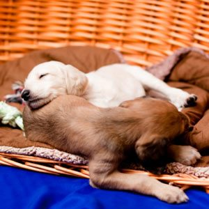 5. Make Sleeping Pets Lie