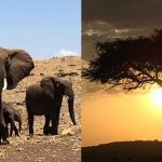 Africa Travel Itinerary: Inspired by Paula McLain's Circling the Sun