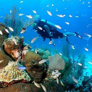 3. Explore the Reef