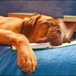 Top 5 Least Intelligent Dog Breeds