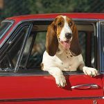 8 Ways To Read Your Dog's Body Language