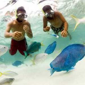 2. Submerge into Undersea Splendour
