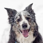 10 Winter Tips for Pets