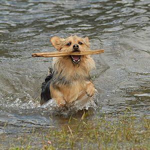 5 Adorable Pet Pics Taken by Reader's Digest Fans