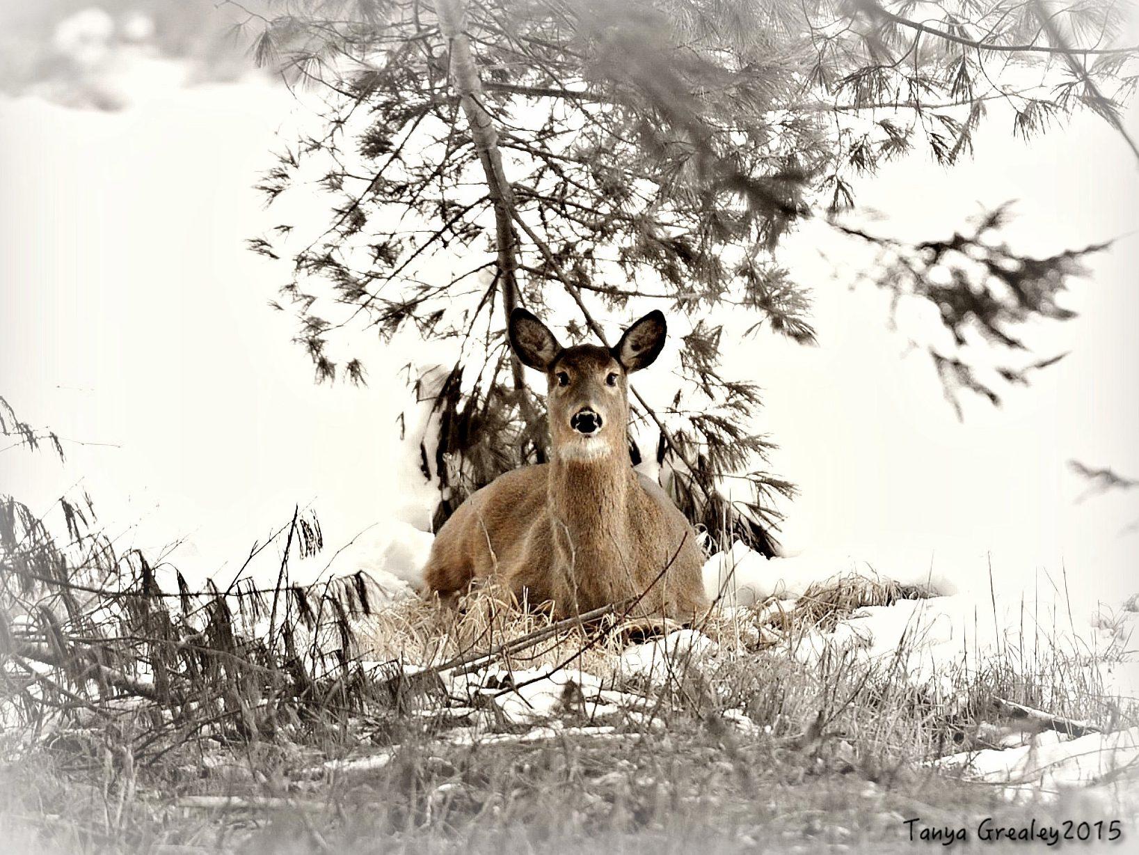 Wild Canada
