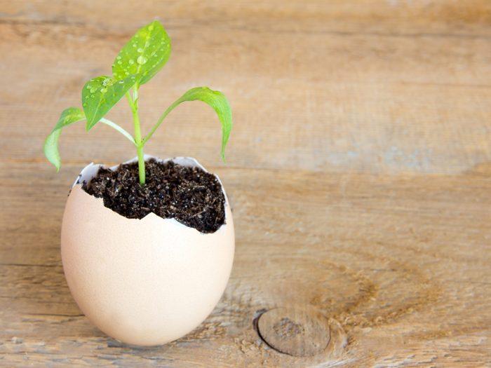 Start Seeds in Eggshells