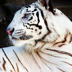 7. Sundarbans National Park, India