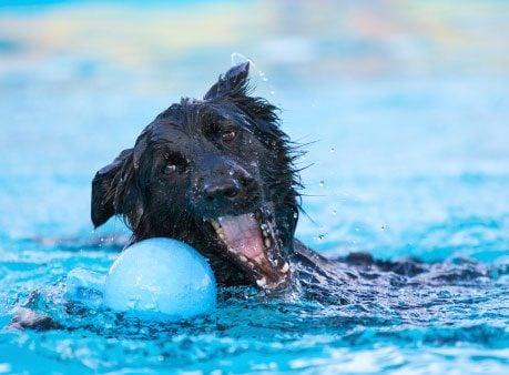 11 Ways to Prevent Pet Heatstroke