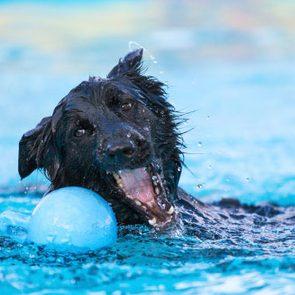 <h4></noscript>11 Ways to Prevent Pet Heatstroke</h4>