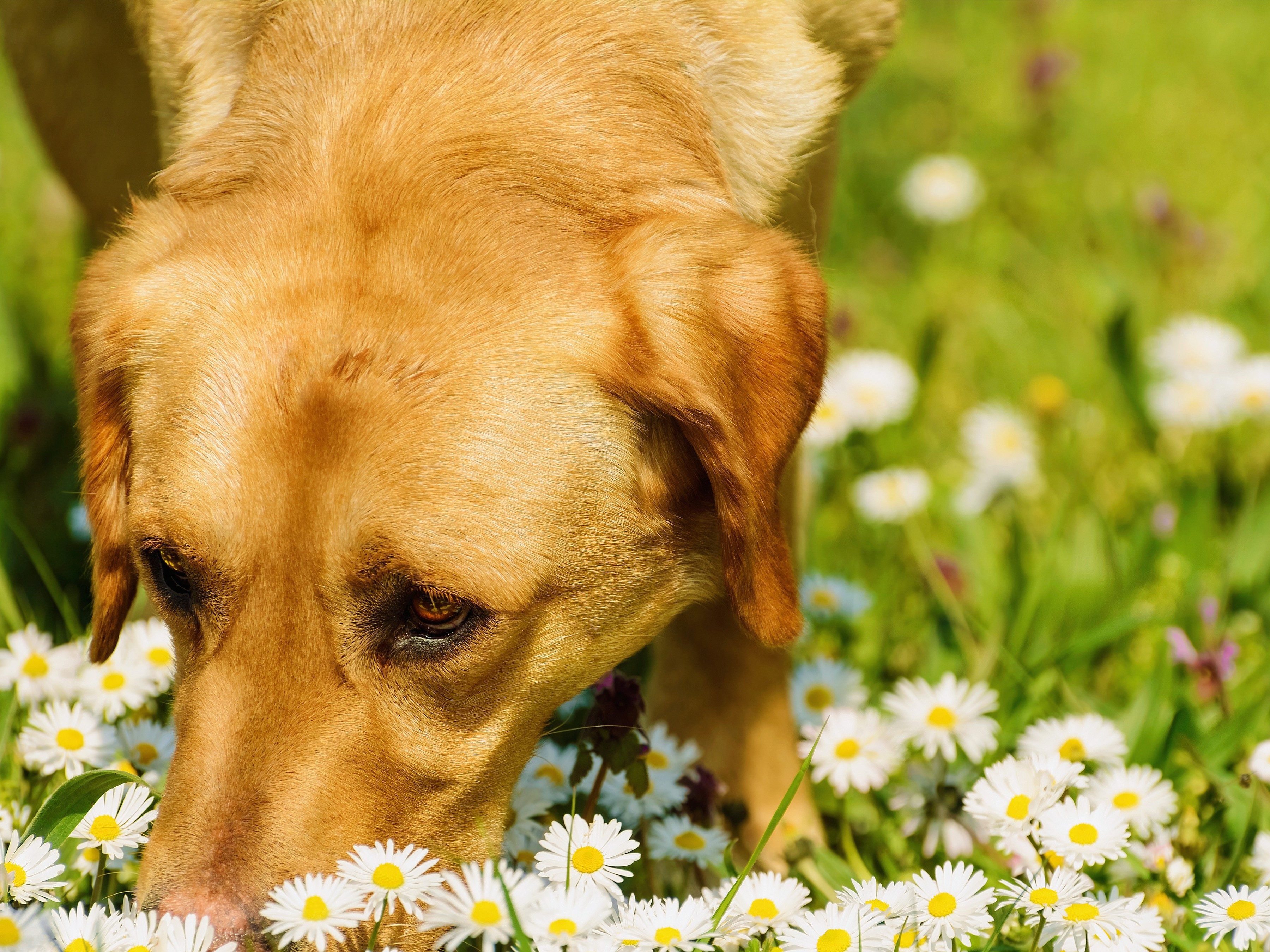 6. Take Your Dog on Nose-Friendly Walks