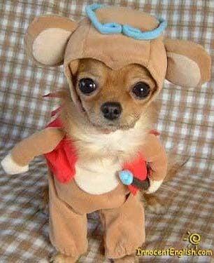 TeddyPup