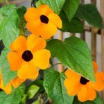 8 of the Best Annuals for Container Gardening