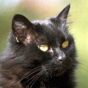 10. Millionaire Pets: Tinker (Cat), $1 million