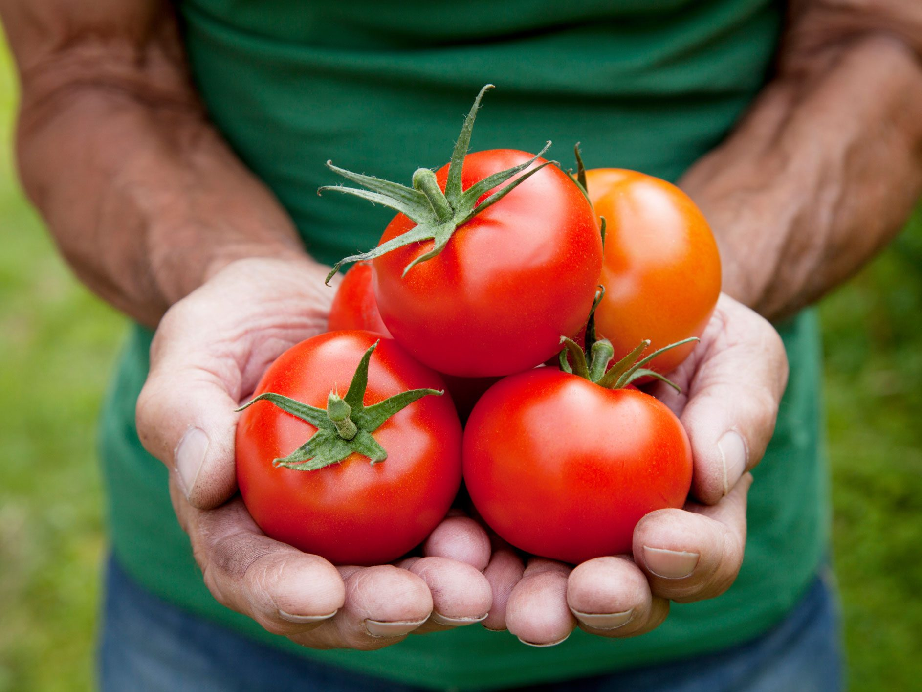Tomatoes - Fresh, Sun-Dried and in Sauce