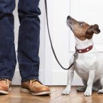 How to Encourage Good Behaviour from your Pet