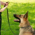 7 Unique Ways to Train Your Dog