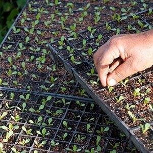 10. Create a Rolling Seed Flat