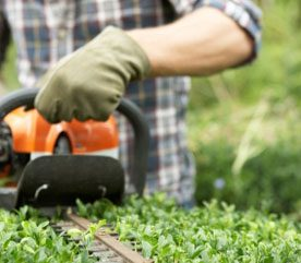 Quick Tips for Trimming Hedges Fast & Well