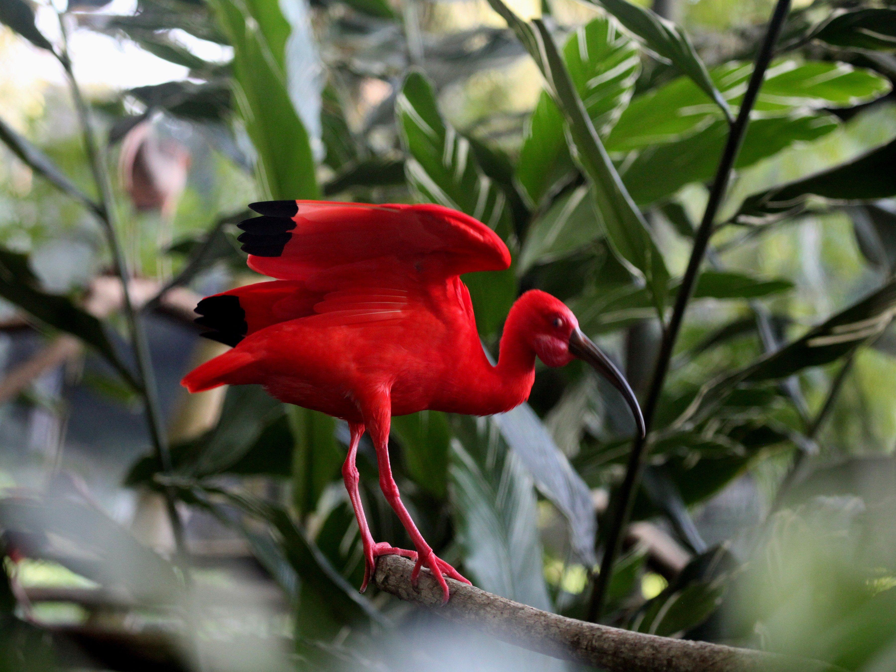5. Trinidad & Tobago