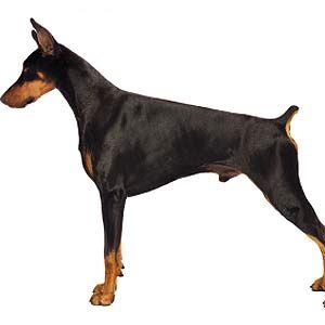 3. Reading Dog Tails: The Sentinel Wag