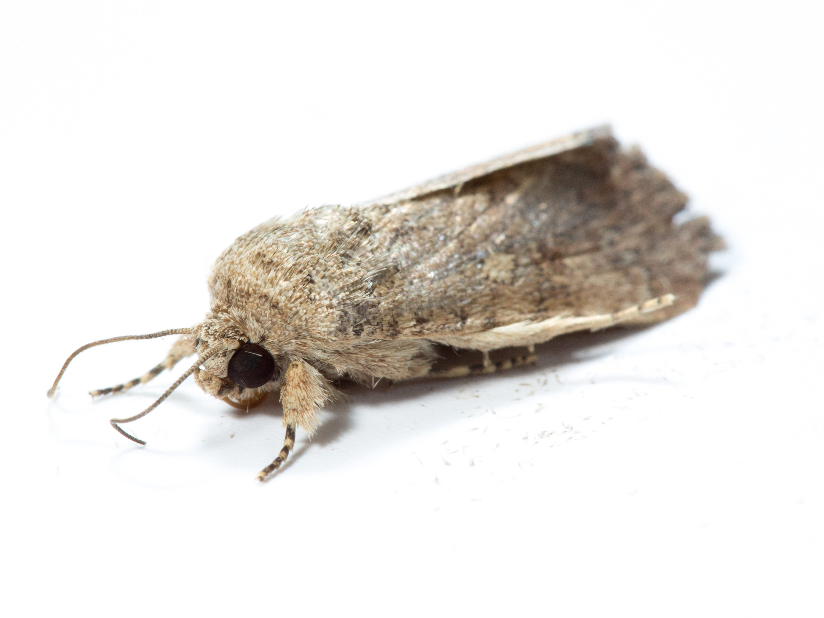 4. Use Ammonia to Repel Moths