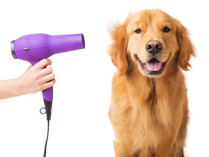 Use a Blow-Dryer to Dry Your Dog After a Bath