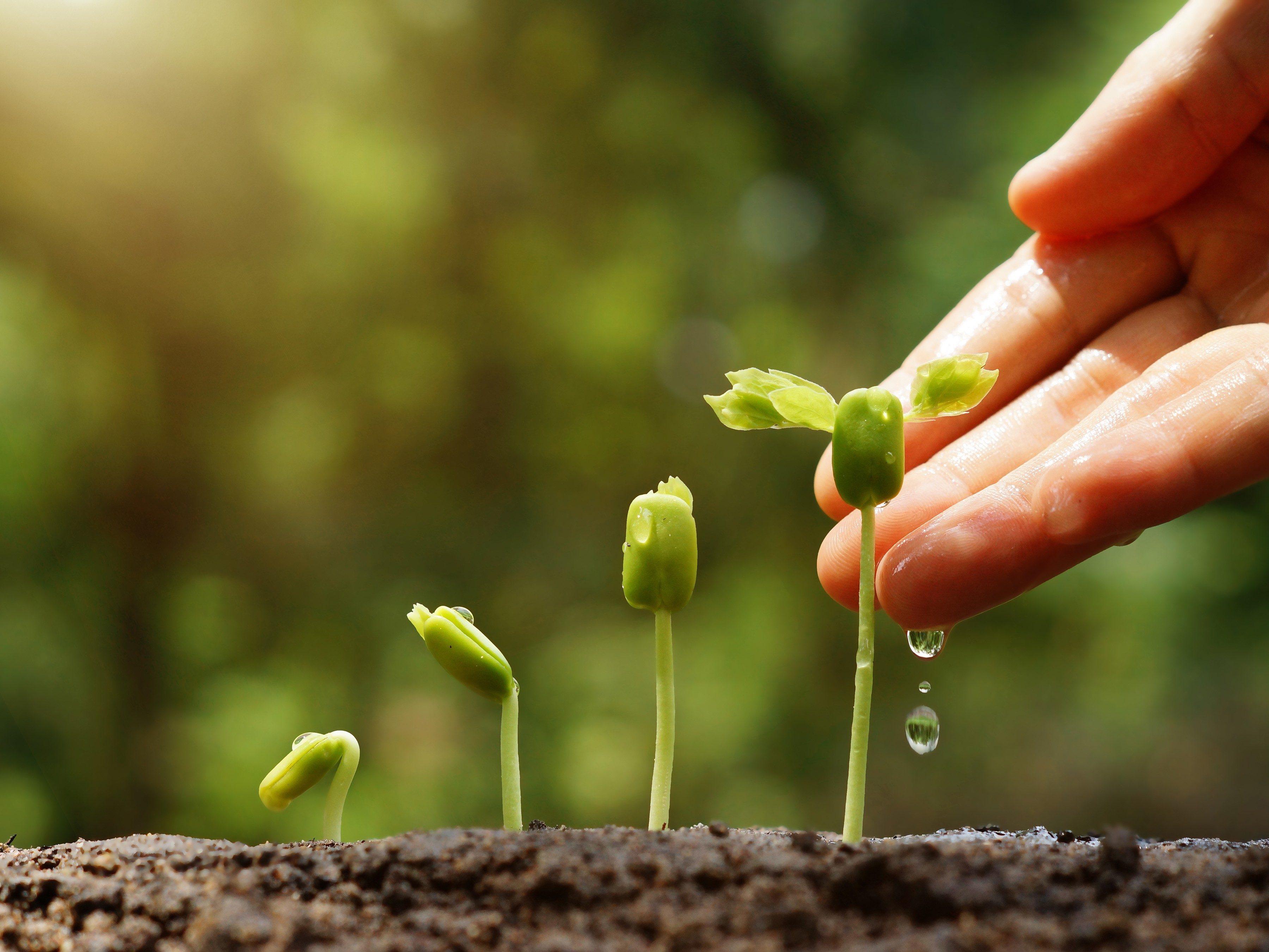 7. Fertilisez moins votre jardin