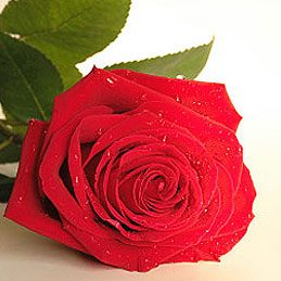 10 Flowers for Romance