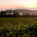 9 Must-See California Wine Attractions