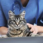 4 Things You Should Know About Your Vet