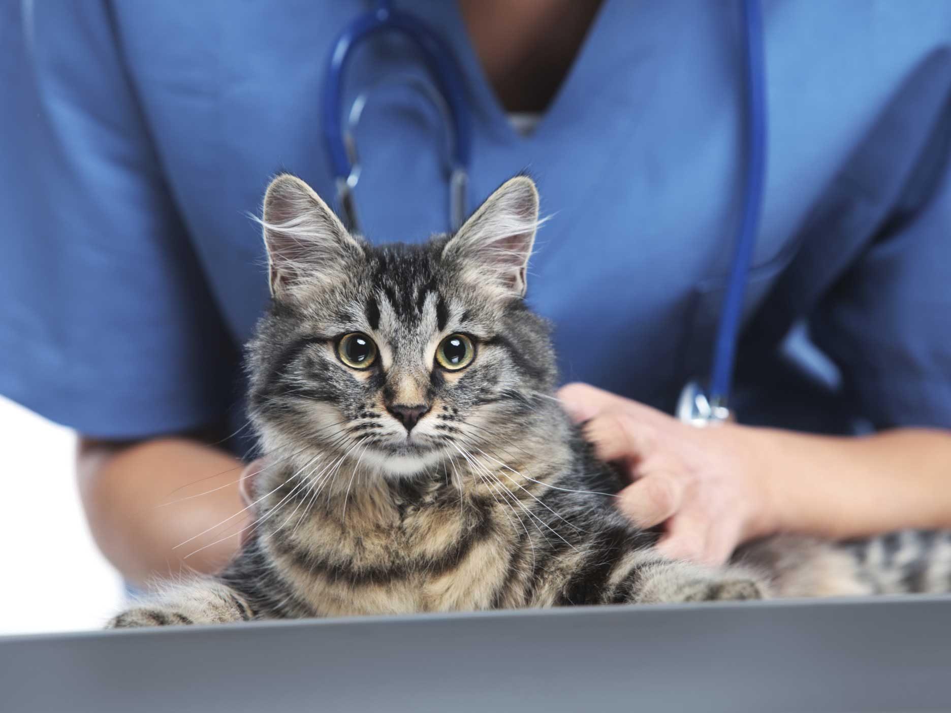 Pet Doctor Care