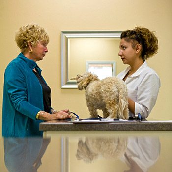 12. How to Find a Good Vet: Ask Questions