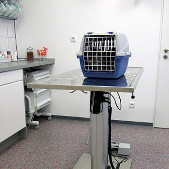 4. How to Find a Good Vet: Services & Treatment Areas