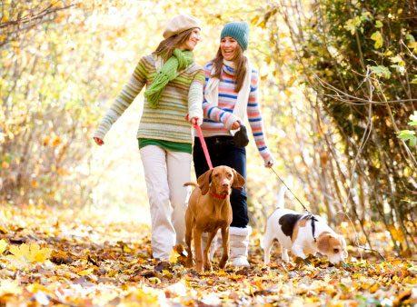 Find a Regular Walking Partner