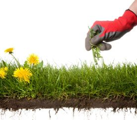 How to Manage Weeds in the Garden