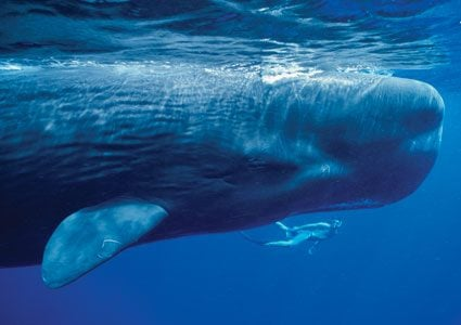 Why Whales Are People Too